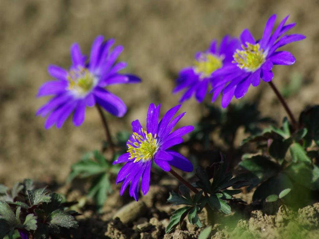 1. Květy