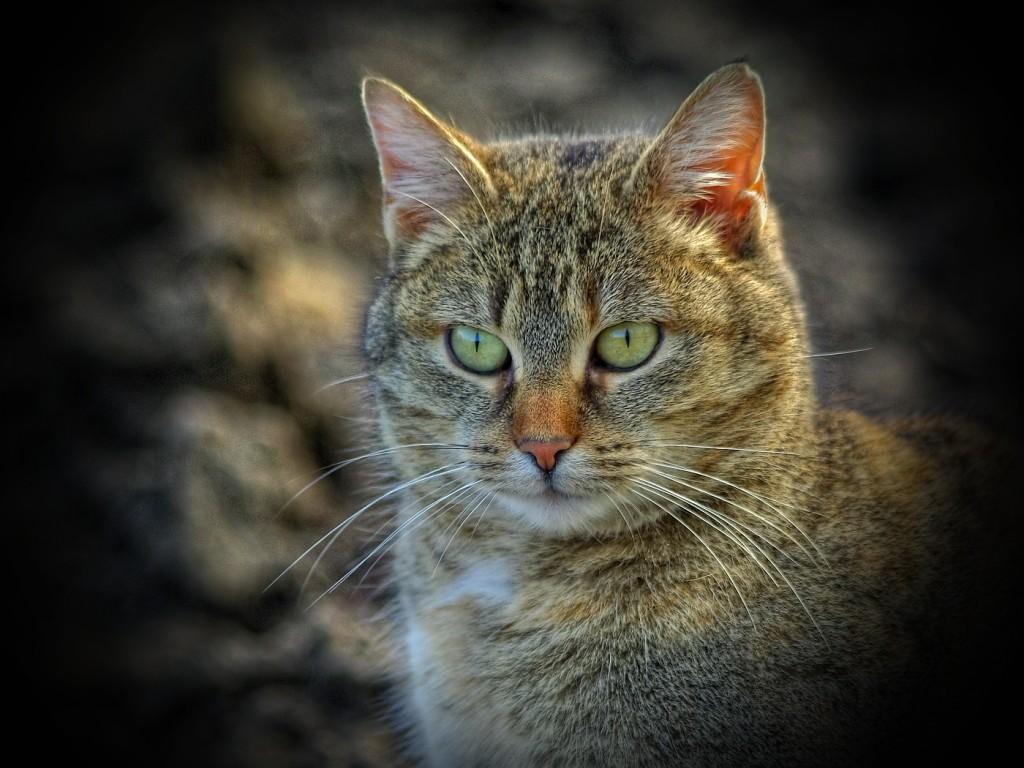 1.Kočka