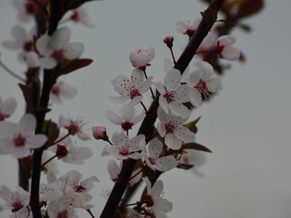 13. Květy