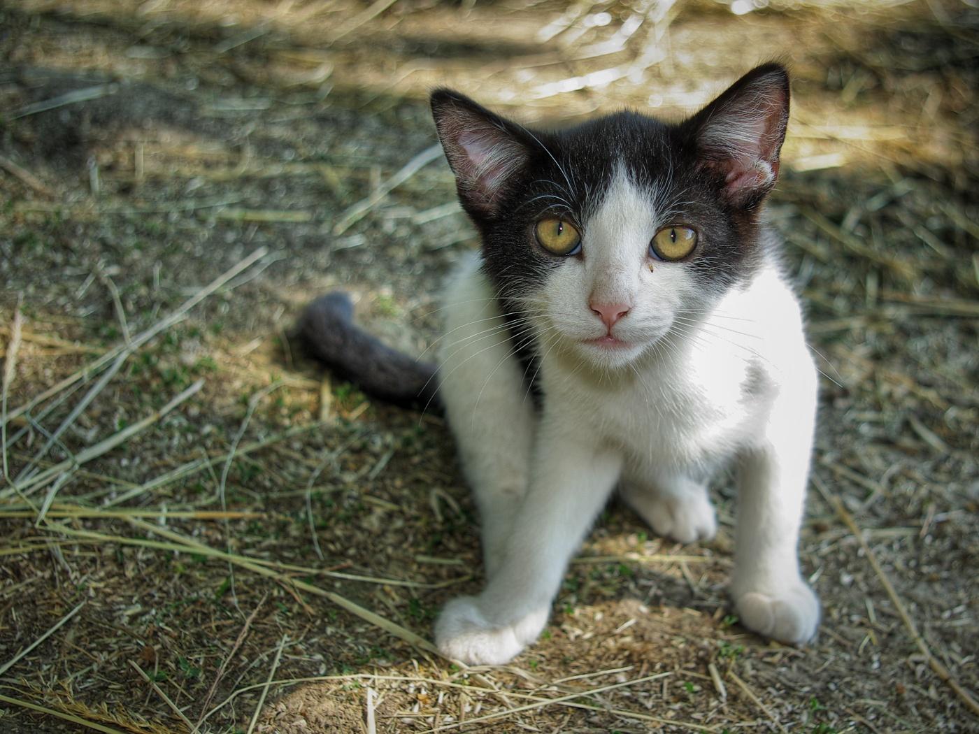 14. Kotě