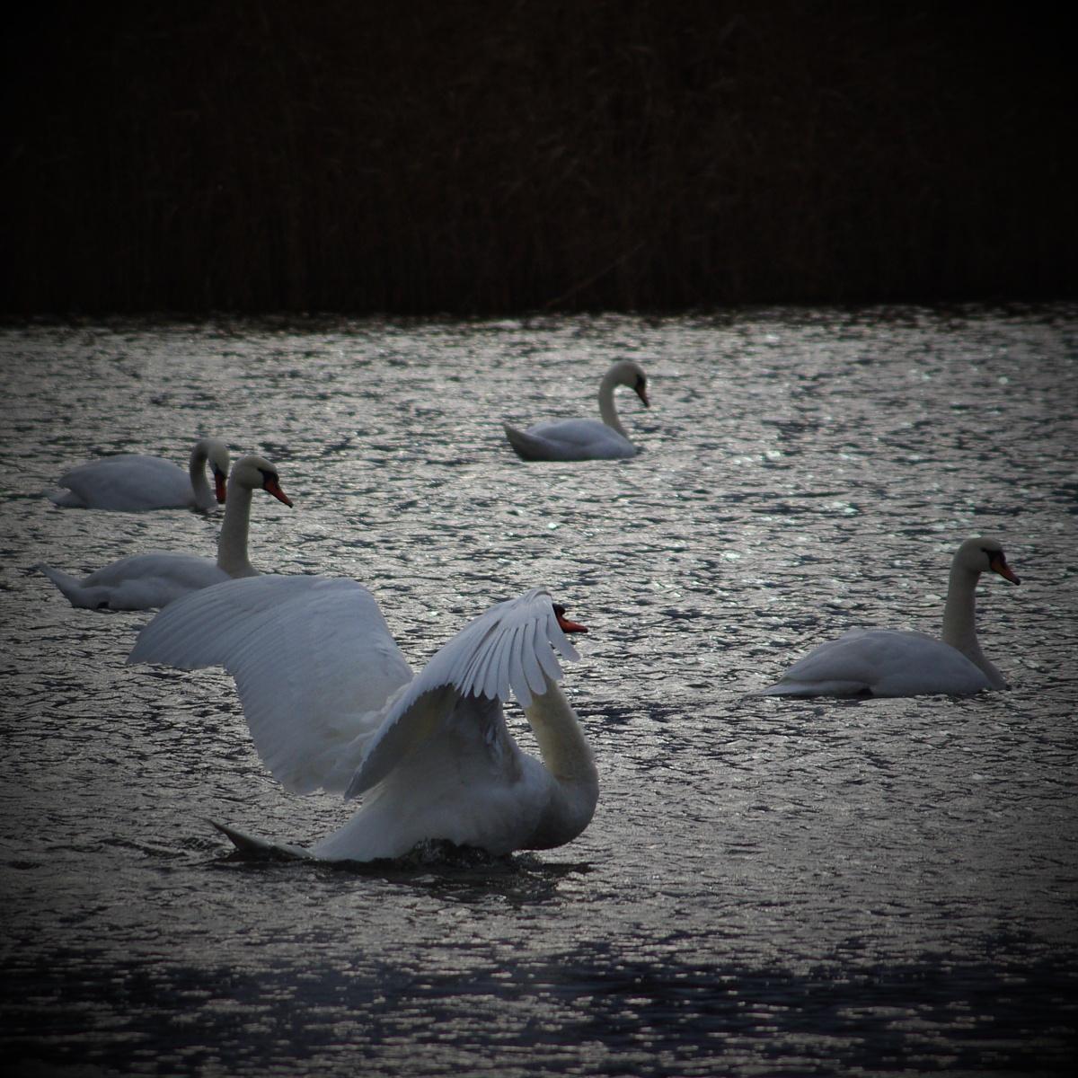 16. Hamerský rybník v Zubří