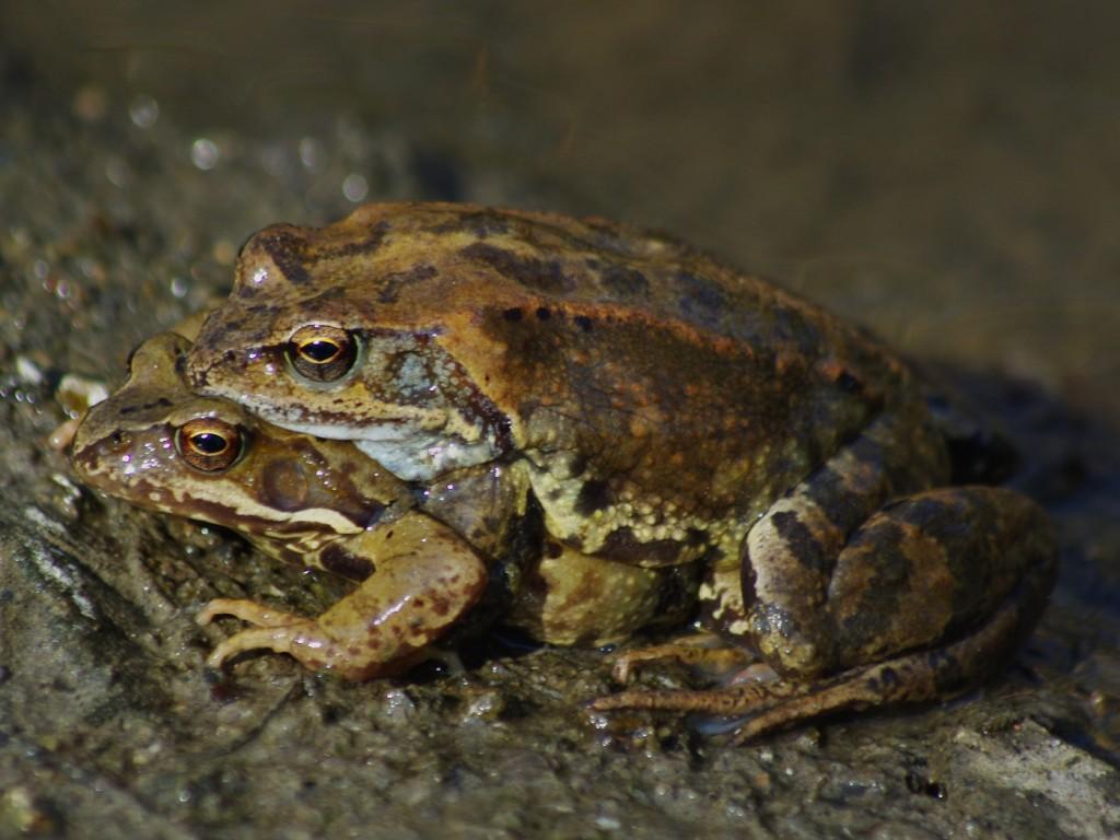 2. Žaby