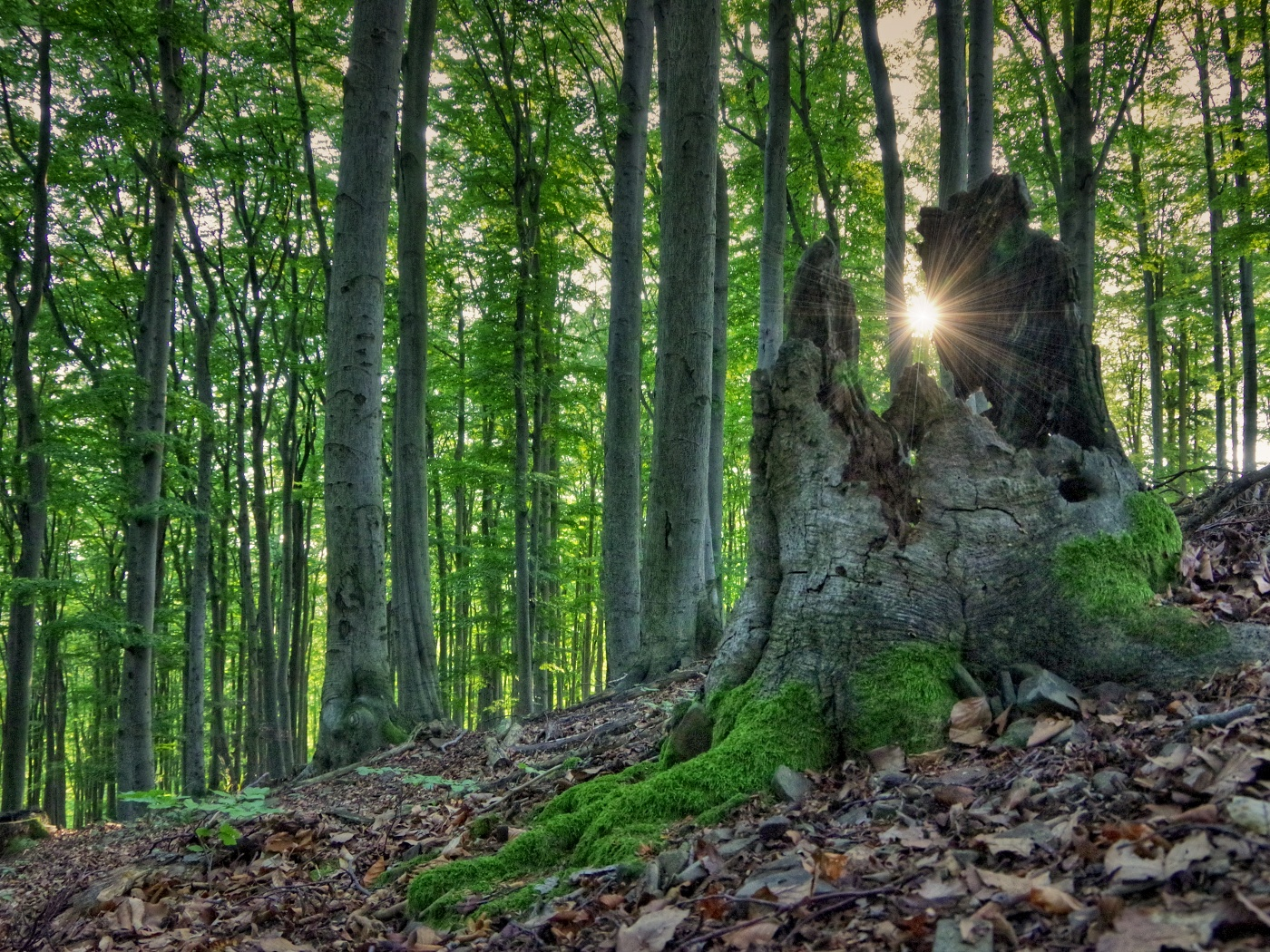 2. Bukový les