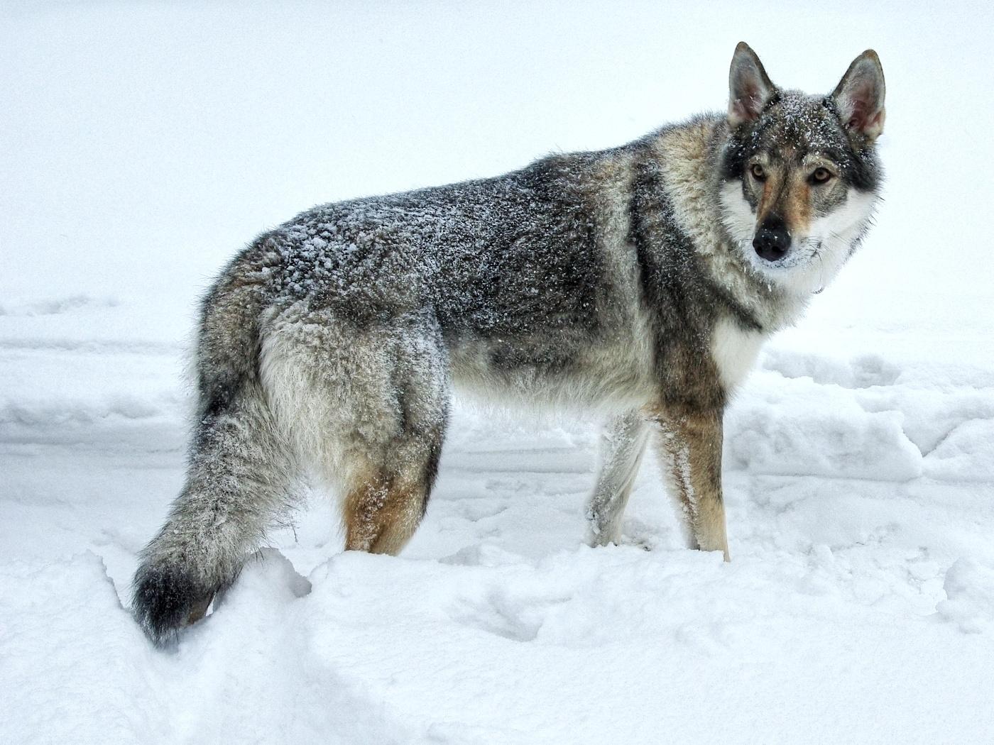 47.  Potkali jsme vlka