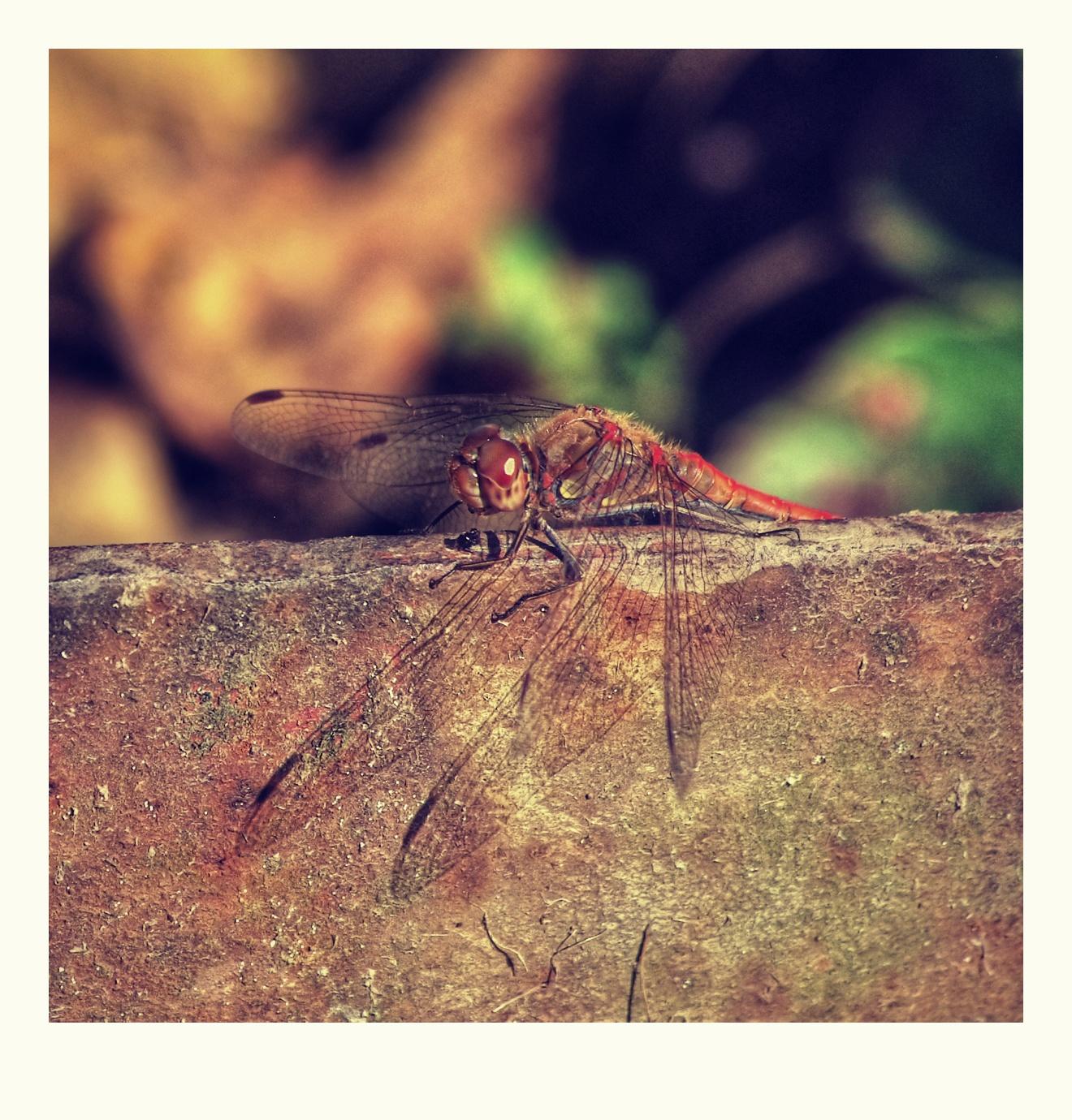 5. Vážka