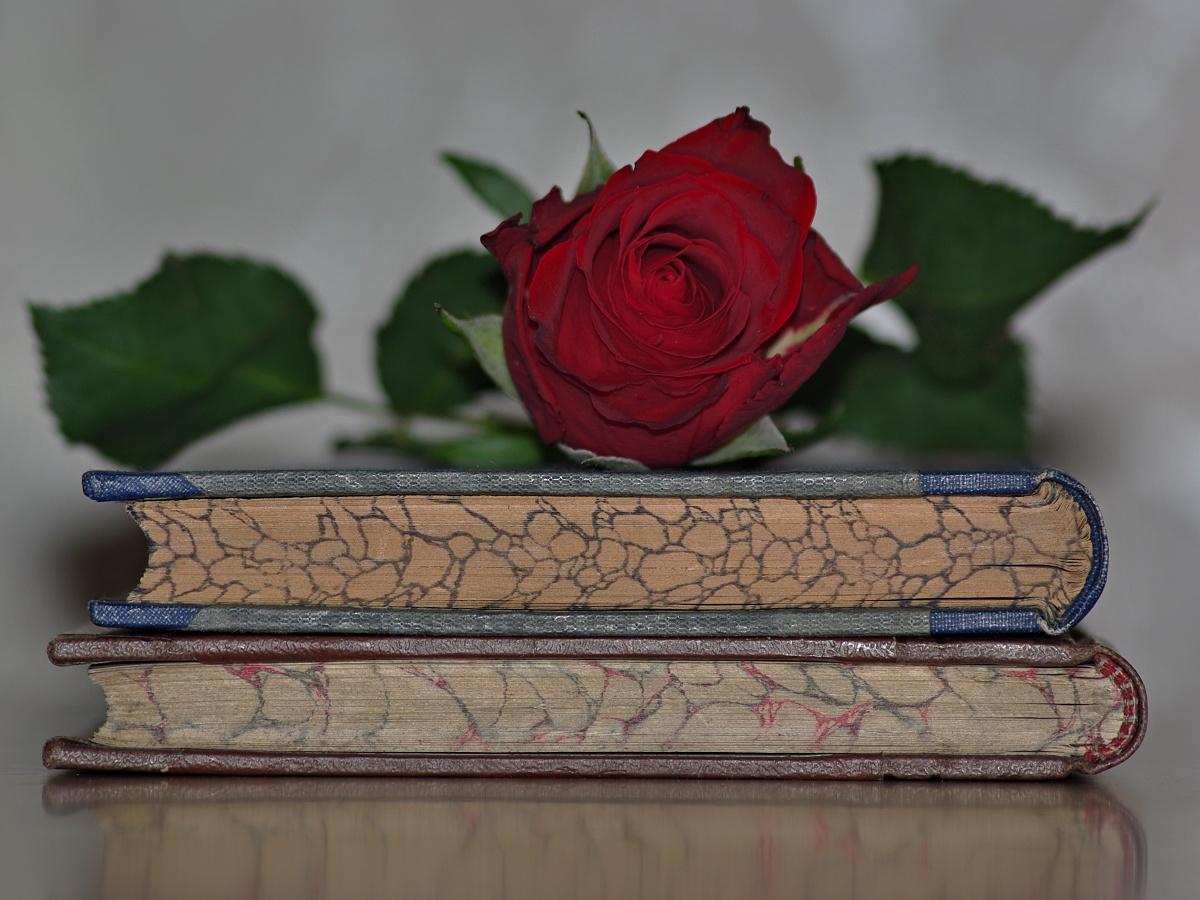 8. Růže
