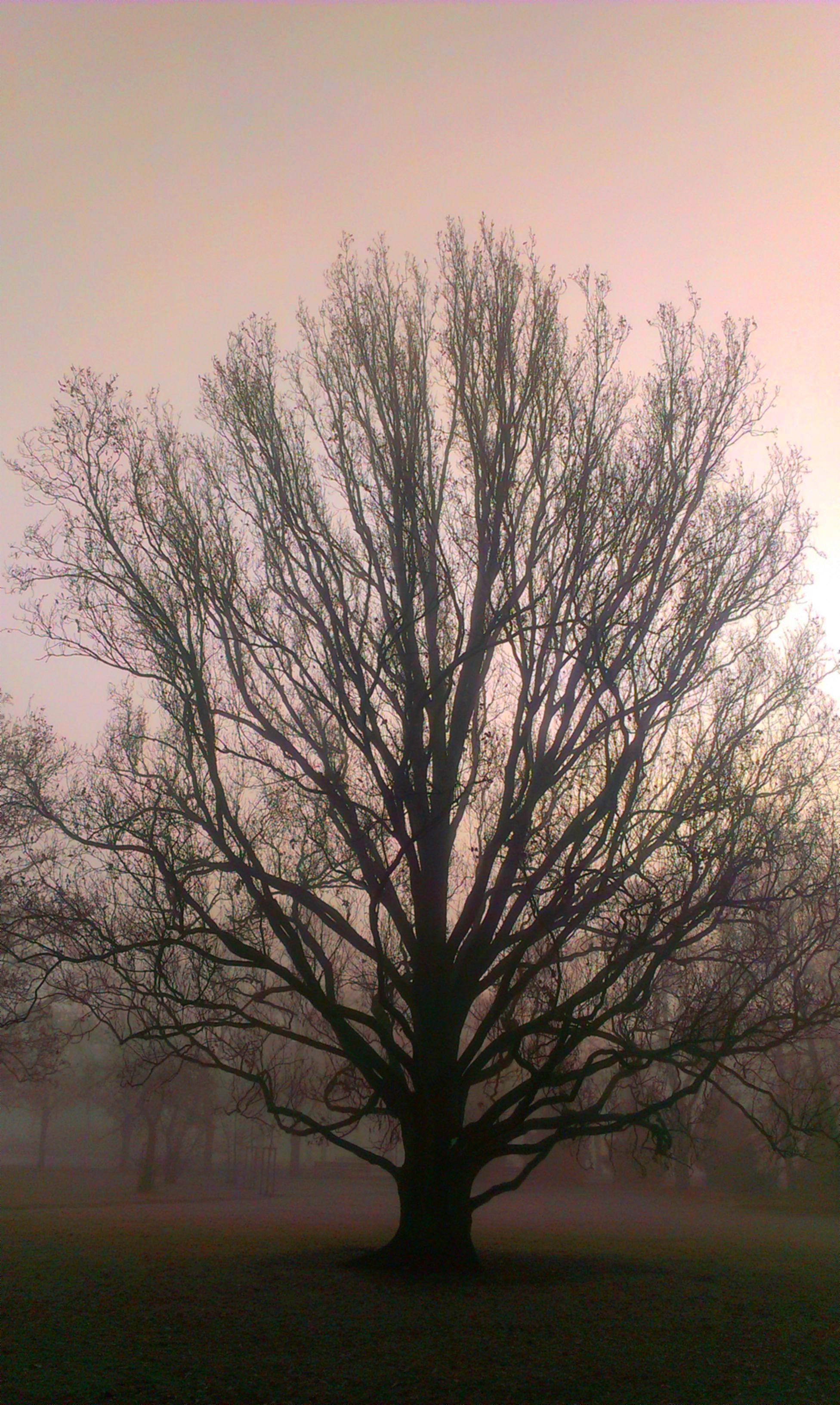 V-strom